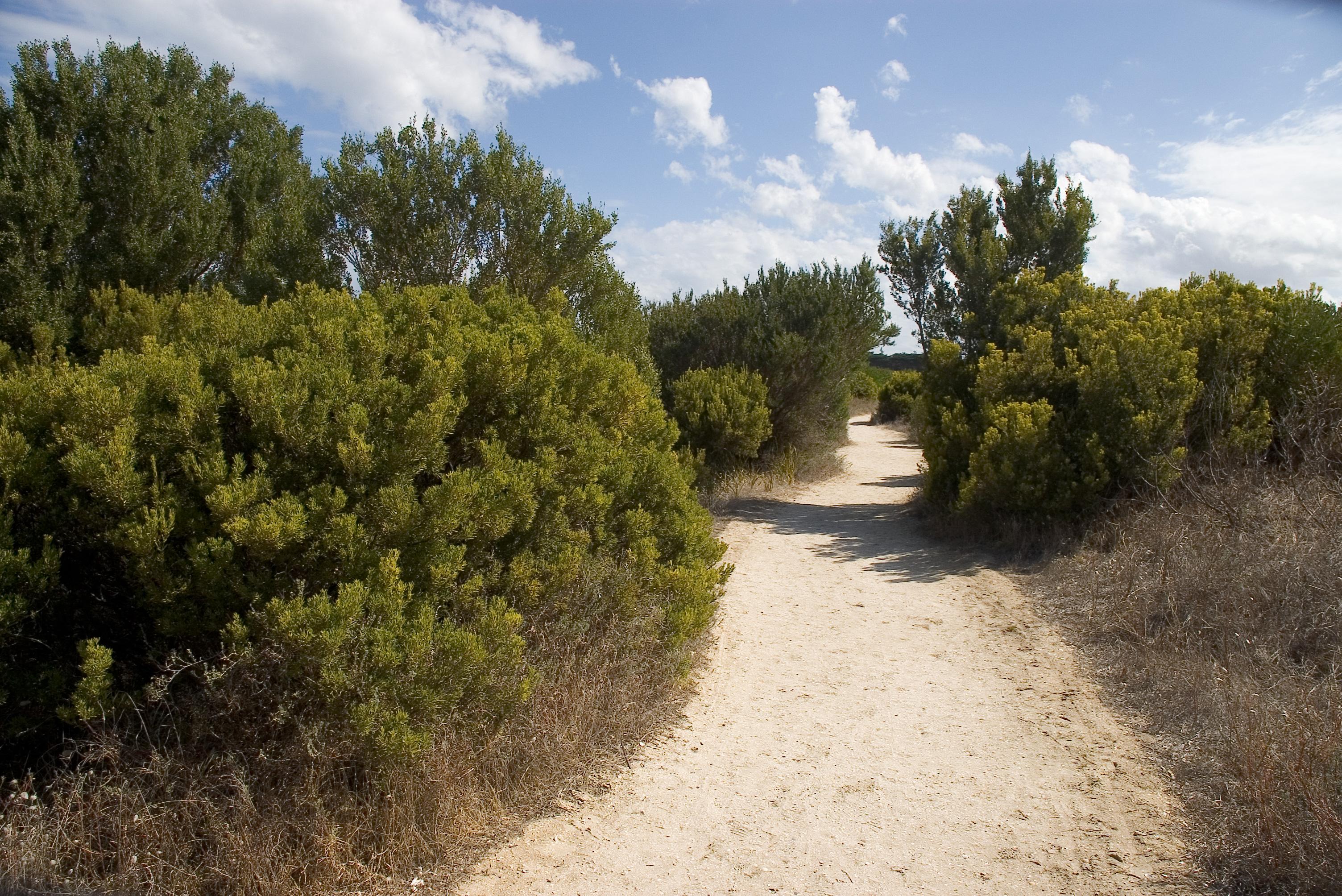 Beach Trail 001