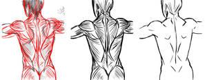 Anatomy Study 1 by Sparker-marker Correction by ravendark82