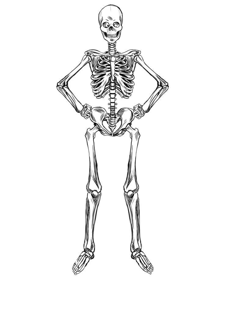 Skeleton Study by ravendark82 on DeviantArt