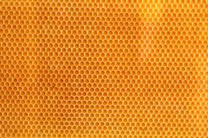 Texture 31 by jvmediadesign