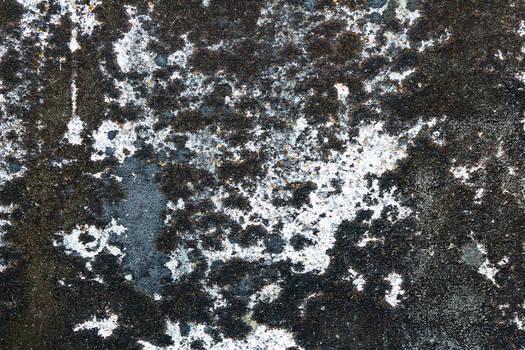 Texture 40