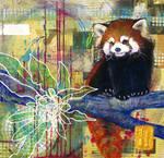 flora + fauna 6: Red Panda