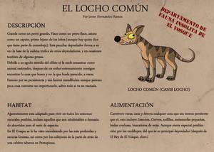 Locho Comun