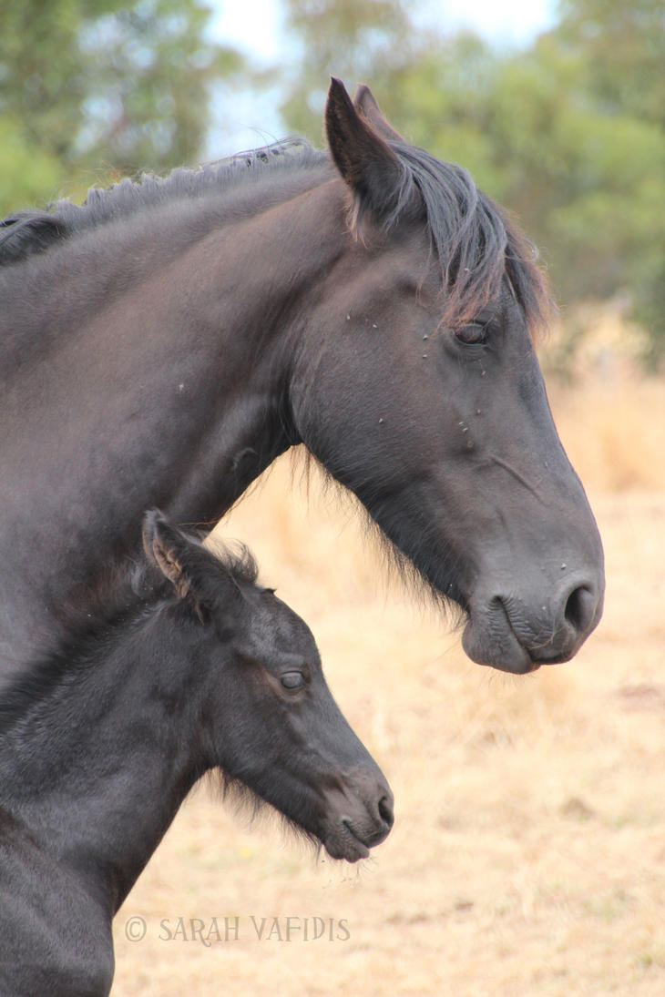 Like Mother, Like Son. by Sarah-Vafidis