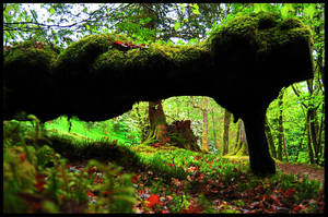 Scottish Forest by Marba