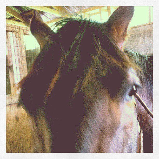 misachu's Profile Picture