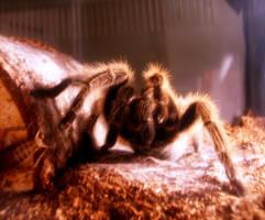 my spider baby