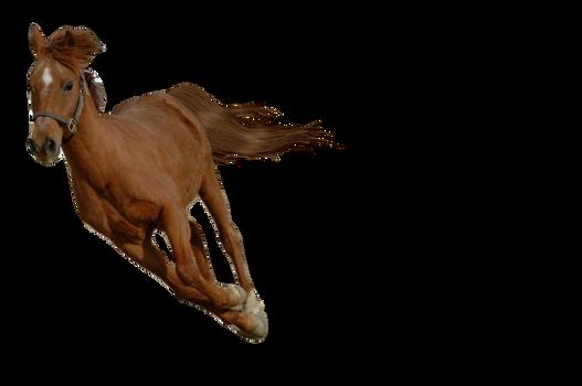 Pre Cut Horse Stock