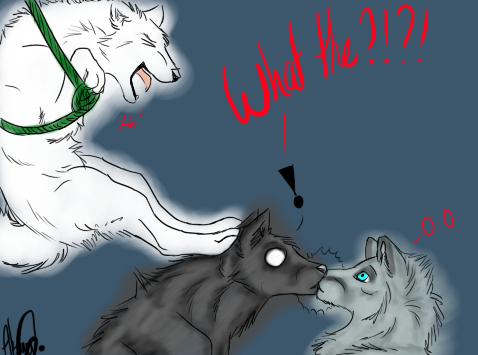 showing post media for psycho wolf drawings www