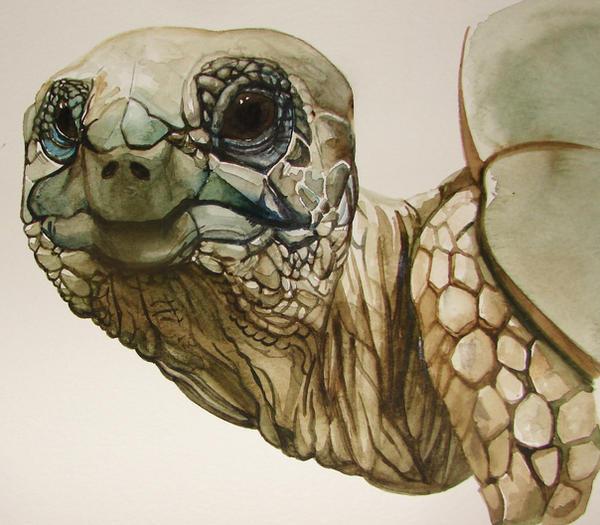 tortoise drawing for pinterest - photo #7