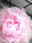 Feminine floral