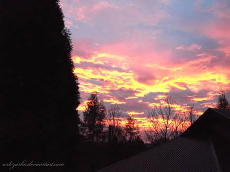 The Pinkish Morning