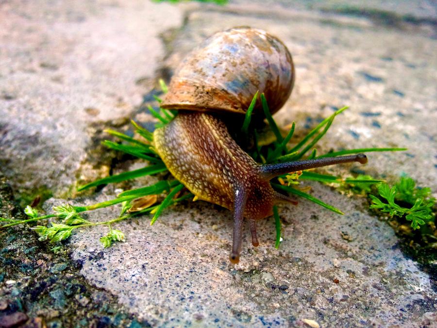 Snail3 by Mehgan1