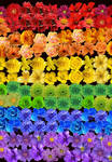 Pride Flag Made Of Flowers