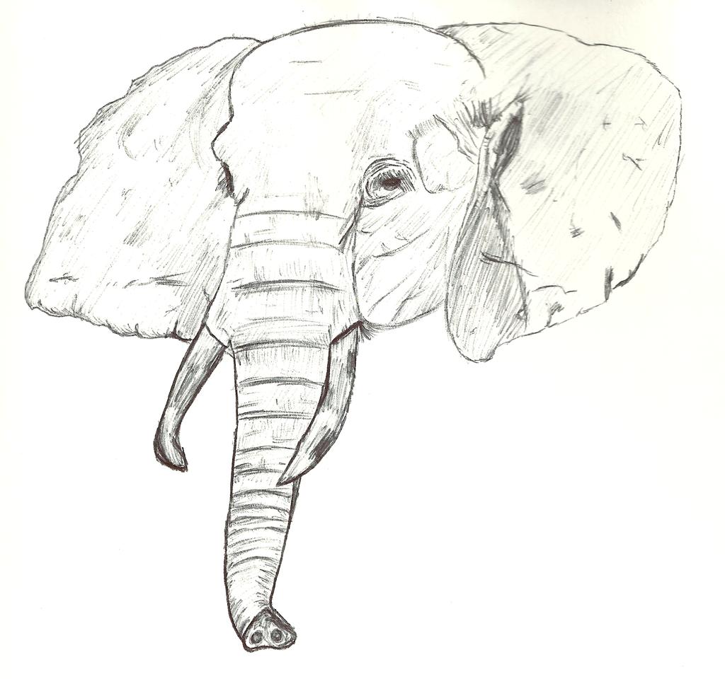 elephant face drawing - photo #11