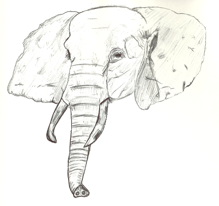 elephant head sketch by happyjustbecause on deviantart
