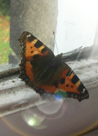 Butterfly friend! by MadameButterfly94