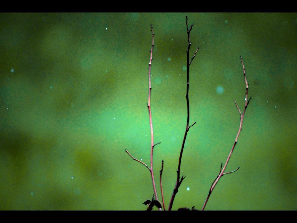 Proljece Kisa II by ron-brouillette