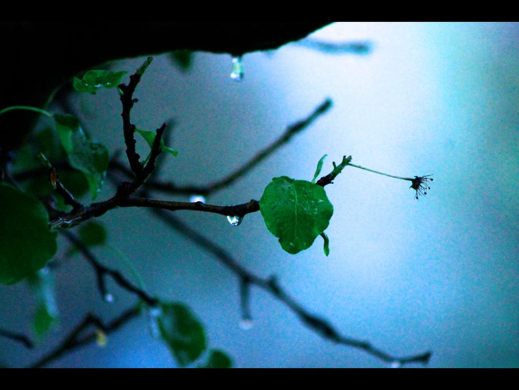 Proljece Kisa III by ron-brouillette