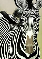Zebra by Piombo