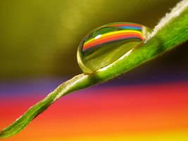 Vegetarian Rainbow Drop by Piombo