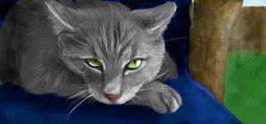 Cat by Razzabel
