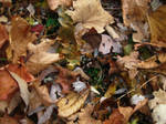 The Leaves Have Fallen _ 5