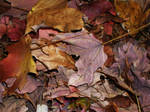 The Leaves Have Fallen _6