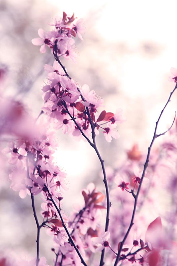 japanese flowers by sylphibelle on deviantart