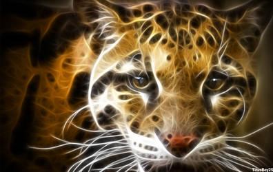 Miau by TitusBoy25