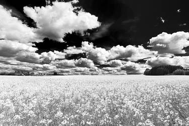 cloudscape over the fields by dannygoedicke