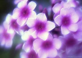 flower by dannygoedicke