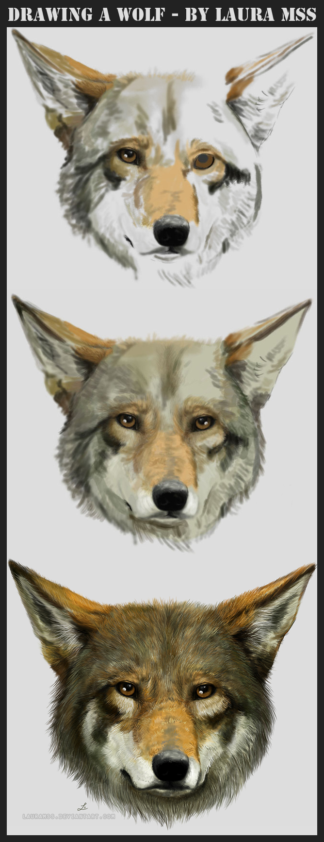 Drawing a wolf by LauraMSS