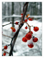 Bittersweet Snow by melissasigalovskaya