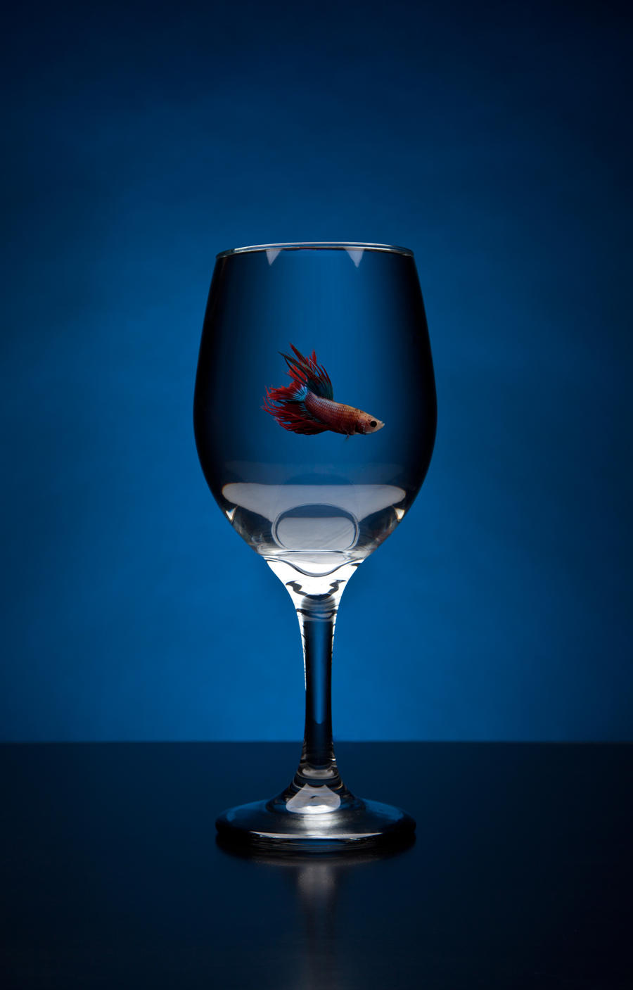 Betta wine glass by len corcino on deviantart for Wine with fish