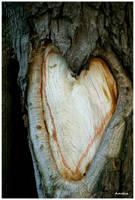 tree heart by Amelia007