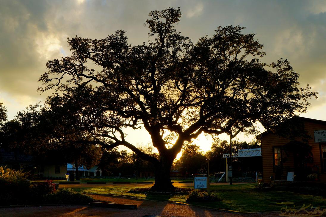Gleaming Tree by JKase911