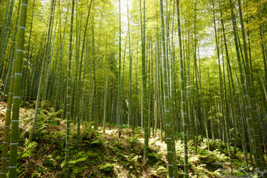 Bamboo Grove by JKase911