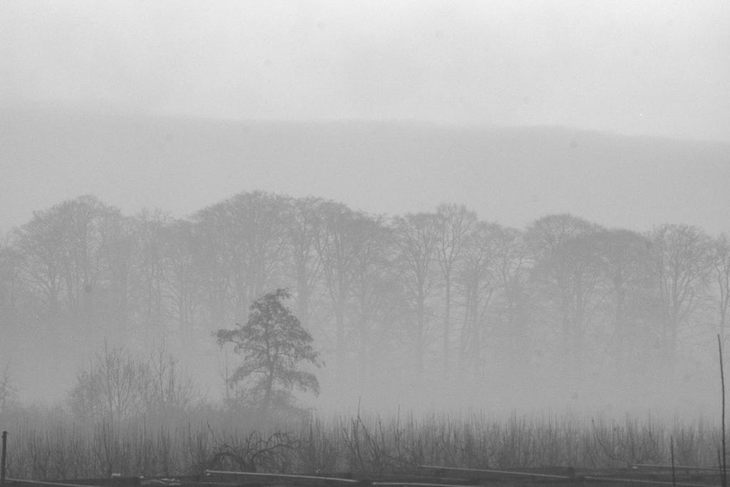 misty by bart2012