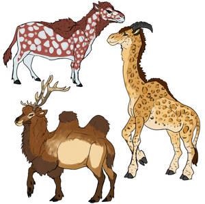 Camel myths
