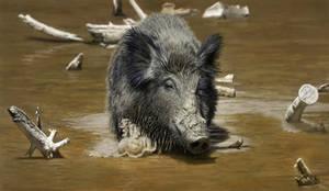 Wild Boar Photo Study