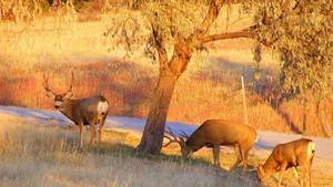 Wild Deer by comit53