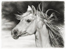 Horse art SideLong
