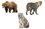 Png animals
