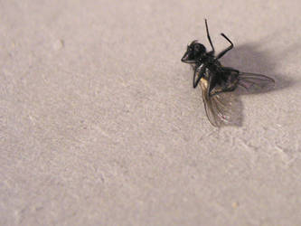 the Fly by morpe