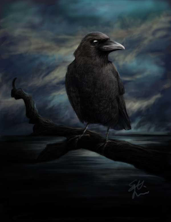 Elegna VS Xandrya [dragon/Crow] Crow_by_SatuL