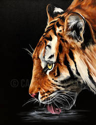 Aksel the Tiger. (Acrylic)