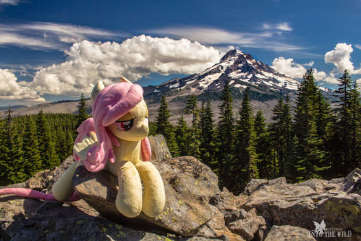 A View of Mt Hood from Owl Point with Flutterbat!