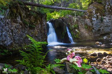 Exploring A Remote Falls with Flutterbat!