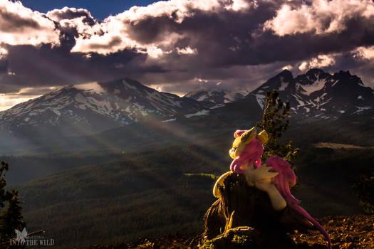 Three Sisters Sunset from Tumalo Mt. w/ Flutterbat
